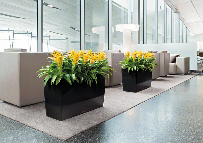 Офисные горшки для цветов