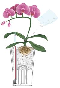 Orchideje v květináčích Lechuza